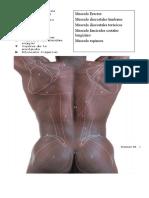 Articulación atloidoodontoidea