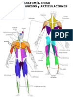 Anatomia 2011 4ºESO