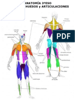 Anatomia 2011 3ºESO