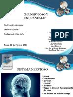 Sistema Nervioso Admi (2)