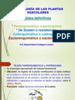 Morfología vegetal (Parénq.colénq.esclerenq.)