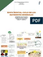 Mapa mental Ciclo de los nutrientes minerales
