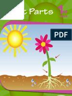 Plant-Parts