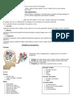 Organização Da Língua Portuguesa