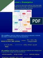 Ciclo de krebs y fosforilación oxidativa