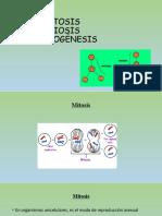 Mitosis - Meiosis