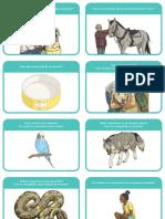 Atitudinea Fata de Animale – Cartonase de Discutii