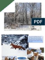 animalele_salbatice_si_iarna