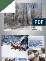 Animalele Salbatice Si Iarna