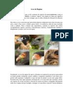 Aves de Rapina_José Willian A.S