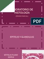 Lab Histologia [1er parcial]