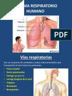 4.Sistema Respiratorio Humano