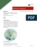 Srteptococcus pyogenes - Año 2019