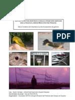 Rapport Passereaux v7