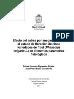 Efecto Del Estrés Por Anegamiento en El Estado de Floración de Cinco Variedades de Fríjol (Phaseolus Vulgaris L.) en Diferentes Parámetros Fisiológicos