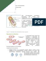 Atividade 1 - Microbiologia  (1)
