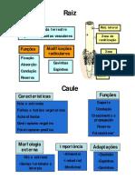 Caule, raiz e folha morfo_externa [Modo de Compatibilidade]