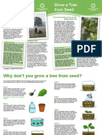 The National Forest Grow a Tree From Seed