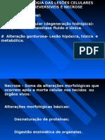 Morfologia Das Lesoes