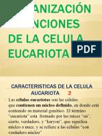 ORGANIZACIÓN Y FUNCIONES DE LA CELULA EUCARIOTA