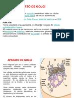 VII. Aparato de Golgi
