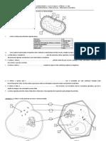 Atividade Complementar 1 Células Procariota e Eucariota