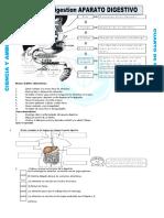 Ficha Mecanismo de La Digestion Para Cuarto de Primaria