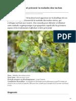 Comment traiter et prévenir la maladie des taches noires du rosier