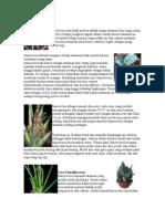 Ciri khusus tumbuhan