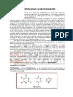 Acidos Nucleicos- ADN y ARN