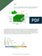 biologia-fotosintesi-clorofilliana