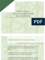 estrutura-ecossistema-1224180881325499-9