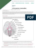 4 Introducción a los pares craneales - Enfermedades cerebrales, medulares y nerviosas - Manual MSD versión para público