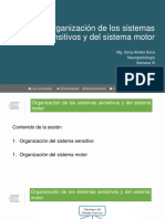 Clase 5. Sistema Sensitivo y Sistema Motor
