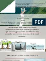 Productividad de Ecosistemas de Ríos - Maestría en Ciencias Con Mención en Gestión Ambiental