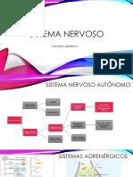 Aula 4 - Sistema Nervoso Autônomo Simpático 2021-03-17 2