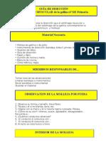 GUIA de DISECCION Estomago Muscular Gallina
