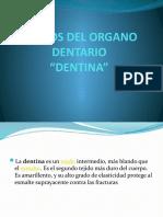 TEJIDOS DEL ORAGANO DENTARIO