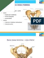 Bacia Ossea Feminina, Cabeça Óssea Fetal, Relações Utero-fetais e Nomenclatura Obstétrica