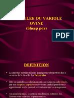 CLAVELEE_OU_VARIOLE_OVINE