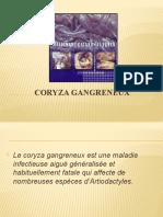 CORYZA GANGRENEUX