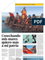 Primer cultivo de algas pardas en el Perú