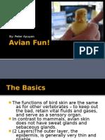 Avian Fun!