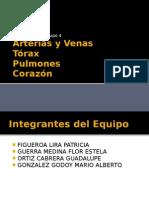 Arterias y Venas TORAX,PULMON,CORAZON