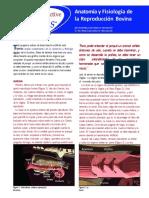 anatomia-y-fisiologia-de-la-reproduccion-bovina
