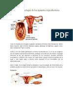 Anatomía y fisiología de los aparatos reproductores