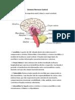 Neuro Revisão