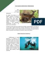 Animales y Plantas de Honduras en Peligro de Extincion