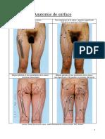 0301-Anatomie de Surface MI