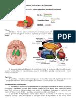 Anatomia Macroscópica do Diencéfalo